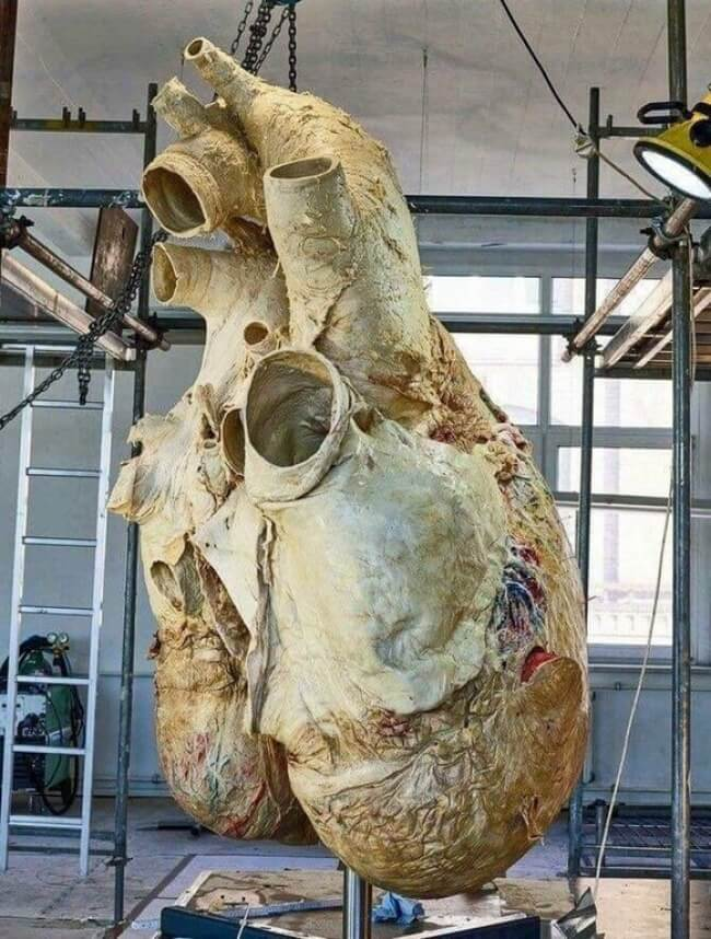 22 Breathtaking Images Of Things You've Never Seen Before A Whale_s Heart