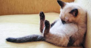 If You Ever Feel Sad, These 31 Sleeping Cats Will Make You Smile